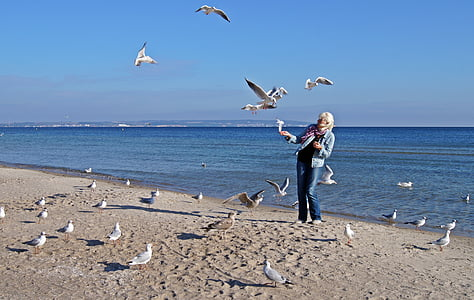ทะเลบอลติก, ทะเล, นกนางนวล, ชายหาด, ผู้หญิง