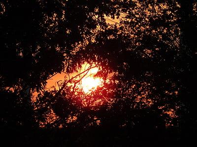 태양, 일몰, 나무, 로맨스, 저녁 하늘, 석양, 자연
