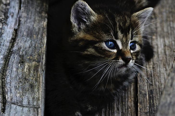 mlade uske maca