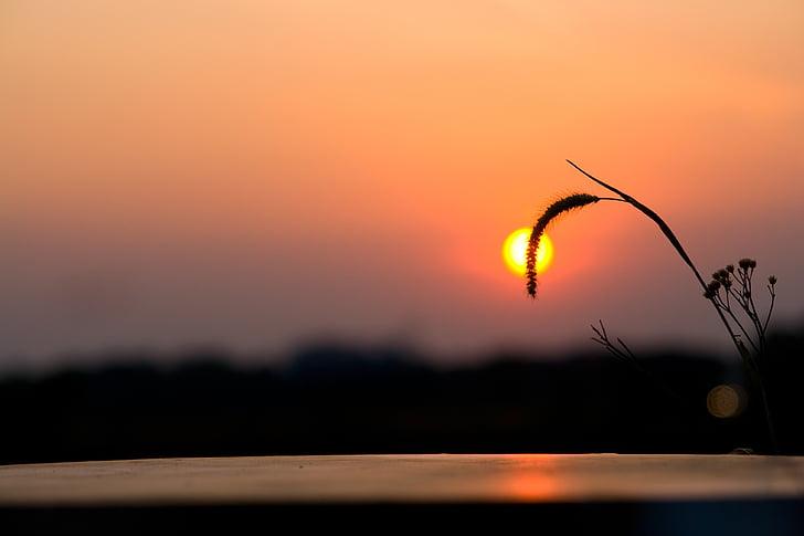 posta de sol, sol, l'estiu, cel, vacances, l'aire lliure, estil de vida
