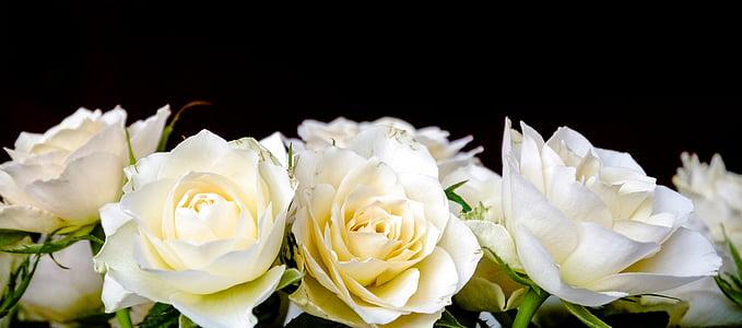 rožės, Rožių puokštė, puokštė, balta, geltona, vartai, Romantiškas