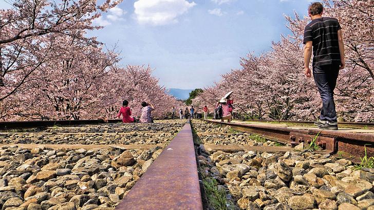 Gleise, Japon, cerisiers en fleurs, romantique, chambre de charme, homme, humaine