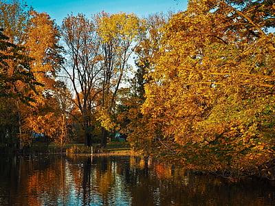 Sonbahar, yaprakları, Altın sonbahar, sonbahar yaprakları, Altın, doğa, sonbahar renkleri