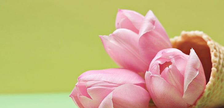 tulipani, tulipanov cvet, cvetje, sladoled stožec, vafelj, rumena, roza