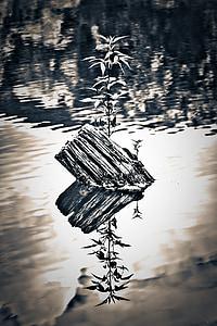 Λίμνη, κατηγοριοποίηση, αντίθεση, νερό, φύση, προκυμαία, δίπλα στη λίμνη