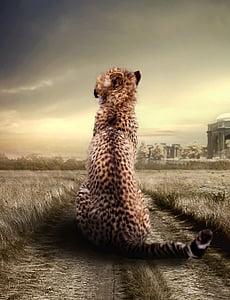 Гепард, животните, животински портрет, Хищникът, животински свят, дива природа, котка