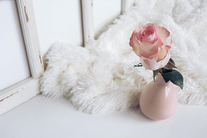 bloem, vaas, weergeven, bont, ontwerp, Indoor, baby's alleen