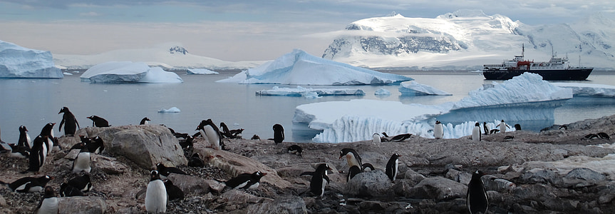 antarctica, penguins, animals, tourism, wilderness, snow, bird