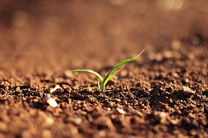 natura, paisatge, sòl, planta, verd, créixer, creixement