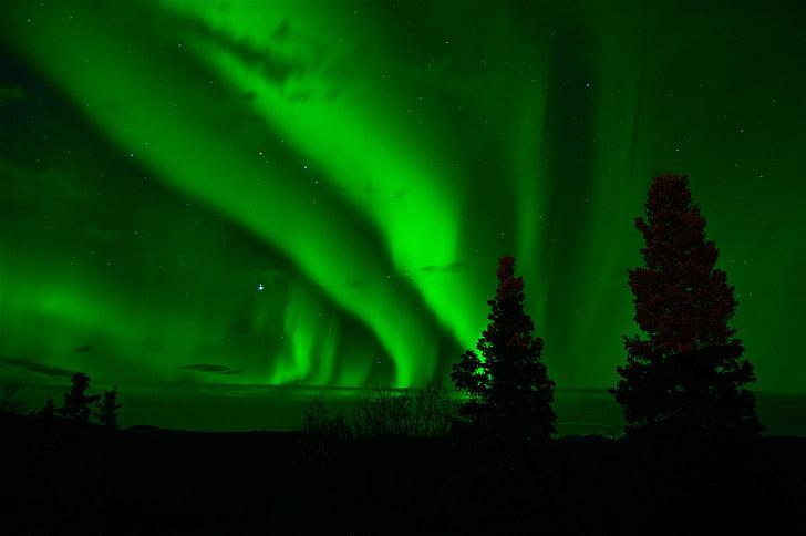 Kuzey ışıkları, Yeşil, Yukon, gece, ağaç, Aurora borealis, karanlık