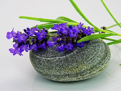 lavanda, flor, porpra, natura, violeta, flors, flors d'espígol
