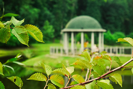 Parc, branca, arbre, fullatge, natura, primavera, verd