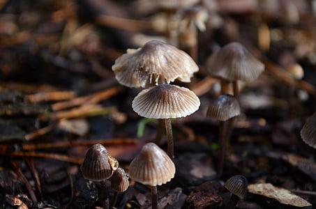 грибы, Лес Пол, Природа, Осень, лесных грибов