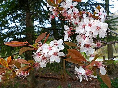 flors, natura, primavera, blanc, contrasten, llum i ombra, floració