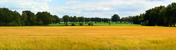 landscape, panorama, cereals, field, nature, outlook, sky