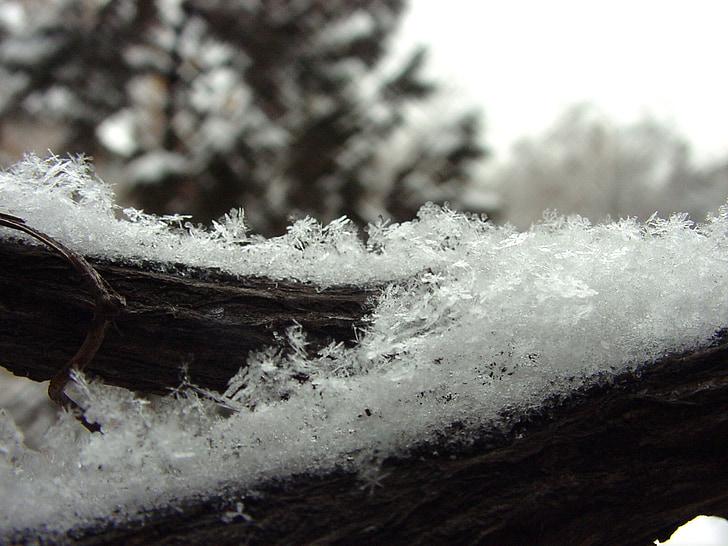 neu, flocs de neu, l'hivern, fred, gelades, gelades de floc de neu, branca