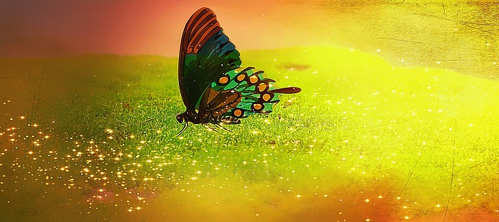 butterfly, insect, color, moss, moss carpet, glitter, fantasy
