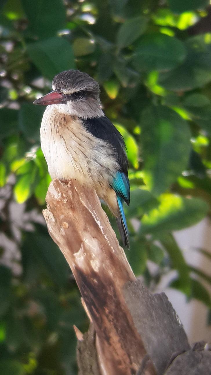 Vodomar, ptica, priroda, životinja, biljni i životinjski svijet, letjeti