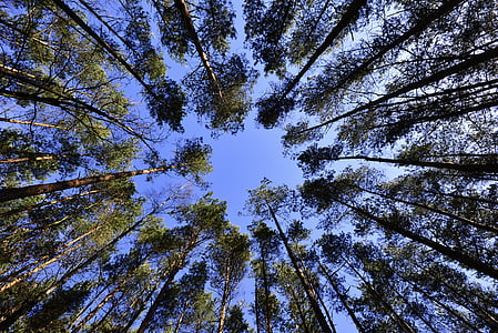 forests, sky, foliage, from the bottom of the, green, landscape, spring