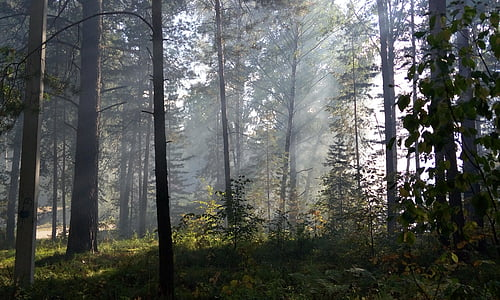 die Strahlen der Sonne, Wald, Licht, Tag, Strahlen, Morgen