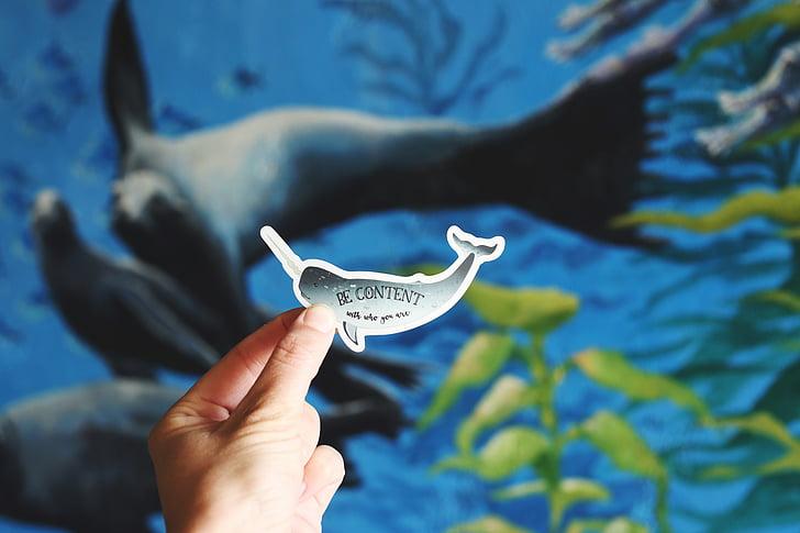 makro, skott, fotografering, grå, papper, Whale, mänskliga kroppsdel