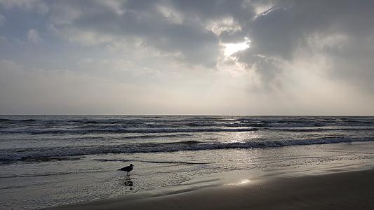 platja, ocell en una platja, Gavina a la platja, Gavina, vora de la platja