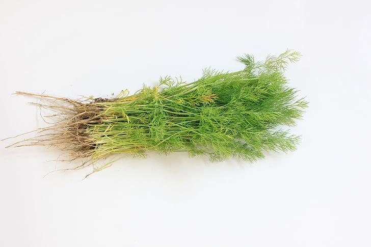 filiaali, tilli, maitse, värske, roheline, vürtsid, köögiviljad
