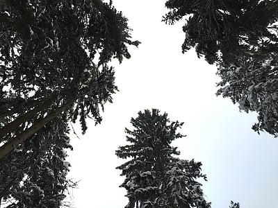 winter, snow, wintry, winter dream, winter forest