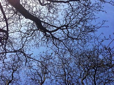 Foto Gratis Langit Estetika Sky Tree Hippopx