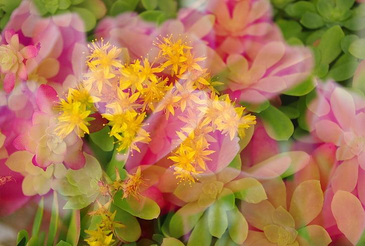 vairākkārtējas iedarbības, ziedi, siltas krāsas, fons, modelis, ziedu