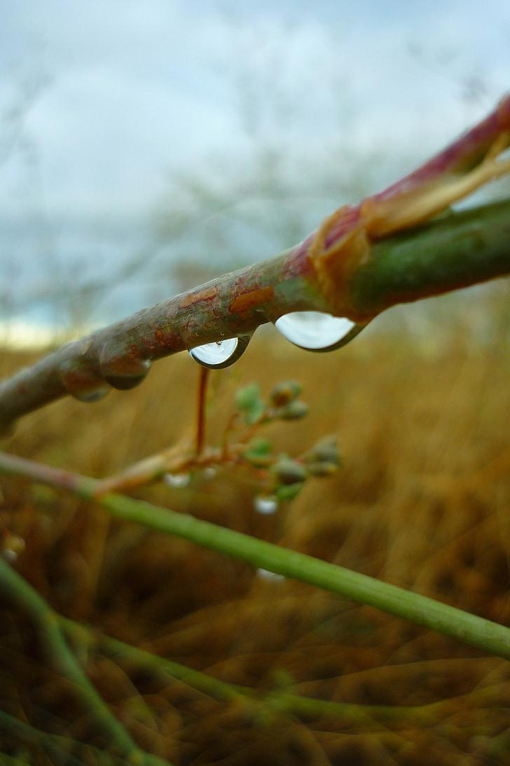 kvapky, vody, dážď, kríky, mokré, Damp, vlhkosť