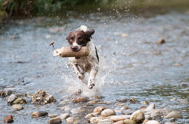 gos, l'aigua, executar, moviment, alegria, esquitxades, un animal