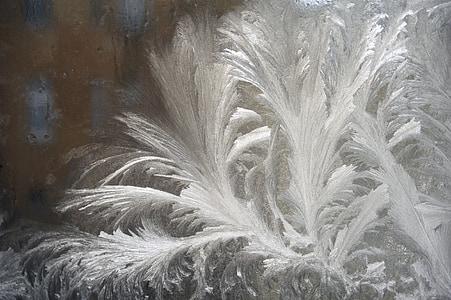 Zing, Frost, külmutatud, jää, külm, loodus, talvel