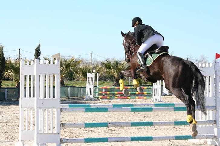 cavall, saltant, negre, Hípica, cavall de salt