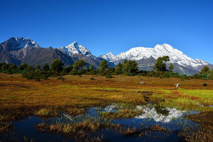 Gunung salju, matahari terbit, peternakan, Tibet, pemandangan