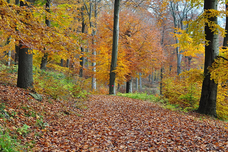 jesenného lesa, jeseň, Forest
