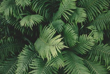 Zelená, listy, Príroda, rastlín