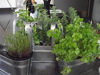 herbes, herba, espècies, deliciós, Mediterrània, aliments, Sa