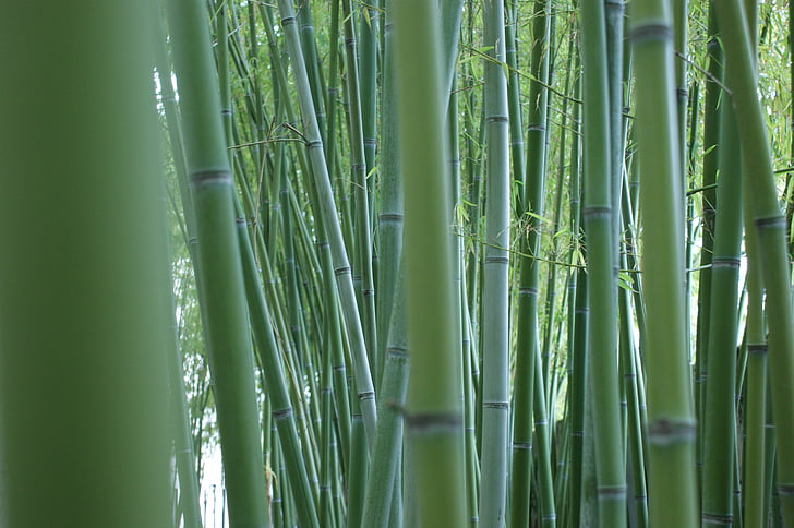 bamboo, stalks, bamboo forest, bamboo rods, green, outside, plant