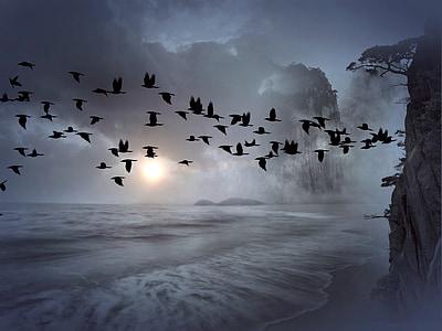 ramat d'ocells, ocells, eixam, muntanya, Mar, l'aigua, blau