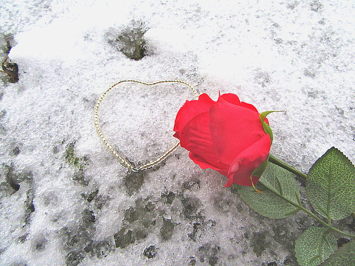 rose, the heart of, snow, romance, love, decoration, romantic