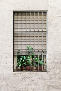 green, indoor, plant, window, flower, flowers, house