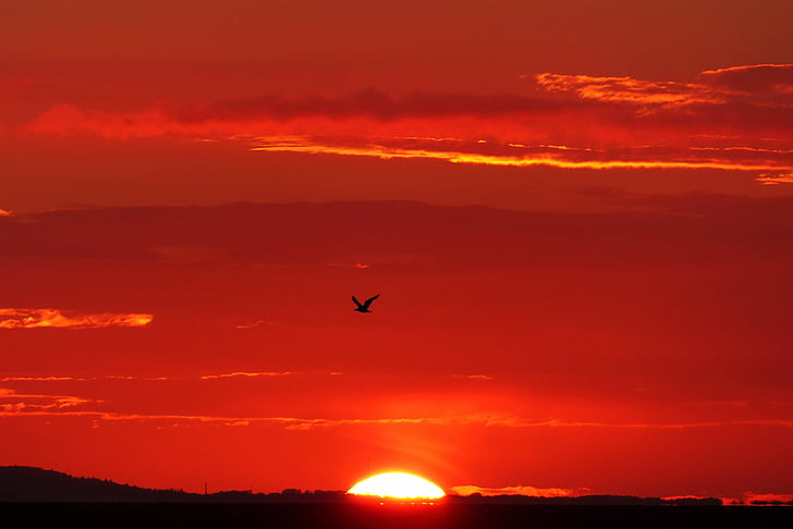 glödande, motljus, fågel, Seagull, solnedgång, kvällshimmel, landskap