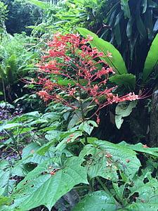 jardí tropical, flor, tropical, jardí, flors tropicals