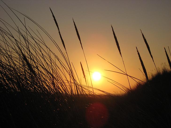 gramínies, torna la llum, posta de sol