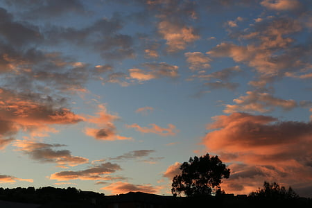 cel, posta de sol, capvespre, nit, cel de posta de sol, arbre