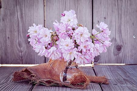 květiny, Třešňové květy, pobočky, třešňový květ větve, růžová, růžové květy, jaro