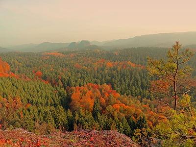 tardor, bosc, Saxon Suïssa, nit de tardor, bosc tardor, estat d'ànim tardor