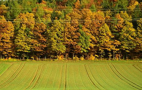 το φθινόπωρο, Φθινοπωρινό δάσος, δέντρα, φύλλωμα πτώσης, φυλλοβόλα δέντρα, ηλιαχτίδα, Χρυσή φθινόπωρο