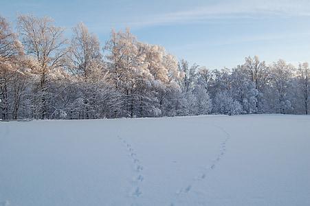 neu, bosc, paisatge de neu, l'hivern